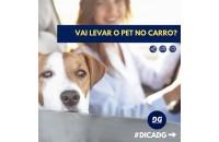 Como transportar seu Pet no carro